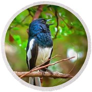 Singing Ceylonese Robin-magpie Round Beach Towel