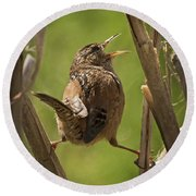 Singing Marsh Wren Round Beach Towel