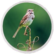 Singing Song Sparrow Round Beach Towel by Jennifer Nelson