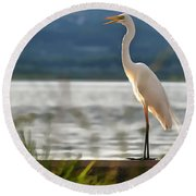 Singing White Egret Round Beach Towel