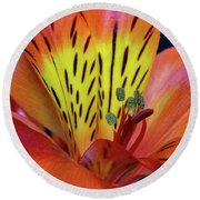 Single Alstroemeria Inca Flower-1 Round Beach Towel