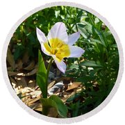 Round Beach Towel featuring the photograph Single Flower - Simplify Series by Carla Parris