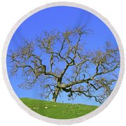 Single Oak Tree Round Beach Towel by Art Block Collections