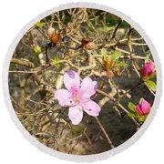 Single Pink Bloom Bush Round Beach Towel