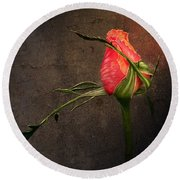 Single Rose Round Beach Towel by Ann Lauwers