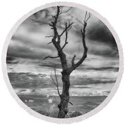 Single Tree In Black And White Round Beach Towel