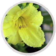 Single Yellow Day Lily Up Close Round Beach Towel
