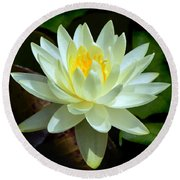 Round Beach Towel featuring the photograph Single Yellow Water Lily by Kathleen Stephens