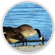 Sipping And Preening On The Beach Round Beach Towel