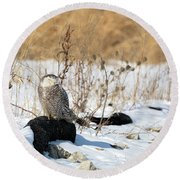 Sitting Snowy Round Beach Towel