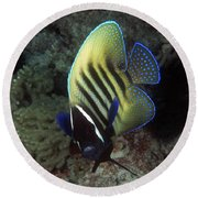 Six Banded Angelfish, Great Barrier Reef Round Beach Towel