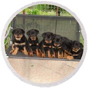 Six Rottweiler Puppies Lined Up On A Swing Round Beach Towel