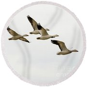 Round Beach Towel featuring the photograph Six Snowgeese Flying by Mike Dawson