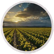 Round Beach Towel featuring the photograph Skagit Daffodils Golden Sunstar Evening by Mike Reid