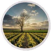 Round Beach Towel featuring the photograph Skagit Daffodils Lone Tree  by Mike Reid