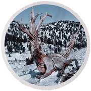 Round Beach Towel featuring the photograph Skating Pine by Mae Wertz