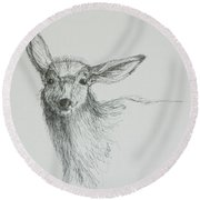 Round Beach Towel featuring the drawing Sketch Of A Mule Deer Doe by Dawn Senior-Trask
