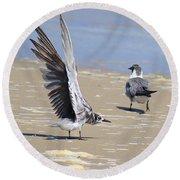 Skiddish Black Tern Round Beach Towel