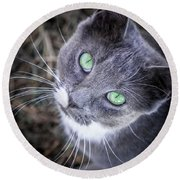 Round Beach Towel featuring the photograph Skitty Green Eyes by Cheryl McClure