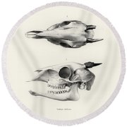 Round Beach Towel featuring the drawing Skull Of A Bush Duiker, Sylvicapra Grimmia by J D L Franz Wagner