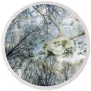 Round Beach Towel featuring the photograph Skully Dreams Of Beach And Trees by Ronda Broatch