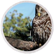 Sleeping Barred Owl Round Beach Towel