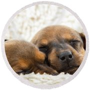 Round Beach Towel featuring the photograph Sleeping Dachshund Puppies by SR Green