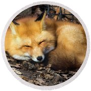 Sleeping Fox Round Beach Towel by David Stasiak