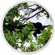 Round Beach Towel featuring the photograph Sleeping Monkey by Francesca Mackenney