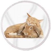 Sleeping On Bun Round Beach Towel