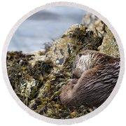 Sleeping Otter Round Beach Towel