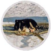 Sleeping Puppy Round Beach Towel