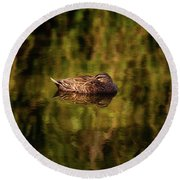 Round Beach Towel featuring the photograph Sleepy Duck, Yanchep National Park by Dave Catley