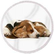 Sleepy Ginger Pals Round Beach Towel