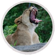 Round Beach Towel featuring the photograph Sleepy Lion by Richard Bryce and Family