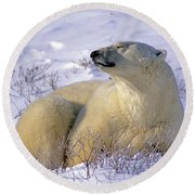 Sleepy Polar Bear Round Beach Towel