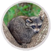 Sleepy Raccoon Sticking Out Tongue Round Beach Towel