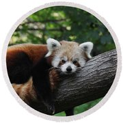 Sleepy Red Panda Round Beach Towel