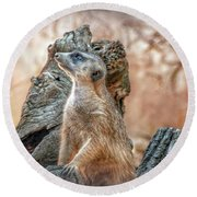 Round Beach Towel featuring the photograph Slender-tailed Meerkat by Hanny Heim
