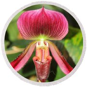 Slipper Orchid 2 Round Beach Towel