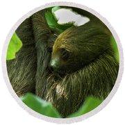 Sloth Sleeping Round Beach Towel