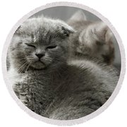 Slumbering Cat Round Beach Towel by Evgeniy Lankin