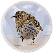 Small Bird Eating Seed Round Beach Towel