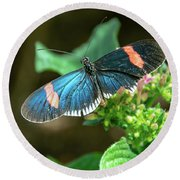 Small Black Postman Butterfly Round Beach Towel