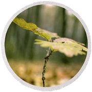 Small Branch With Yellow Leafs Close-up Round Beach Towel