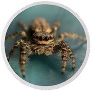 Small Jumping Spider Round Beach Towel