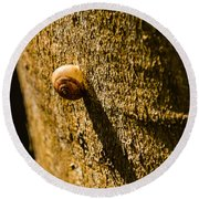 Small Snail On The Tree Round Beach Towel