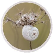 Small Snail Shell Hanging From Plant Round Beach Towel by Gurgen Bakhshetsyan