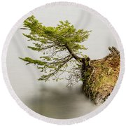Small Tree On A Stump Round Beach Towel