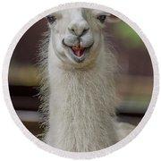 Smiling Alpaca Round Beach Towel